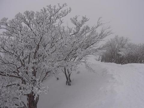 20110212 高見山樹氷1106