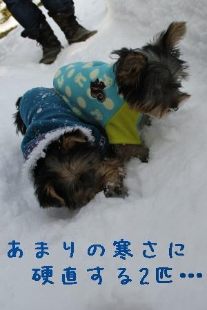 雪原デビュー。
