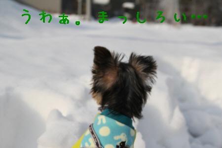 まりお散歩1