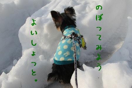 まりお散歩3