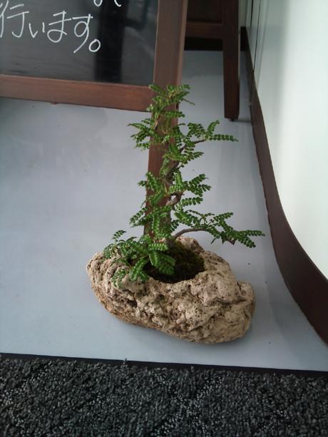 植木のプレゼント