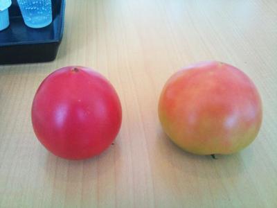 tomatohikaku.jpg