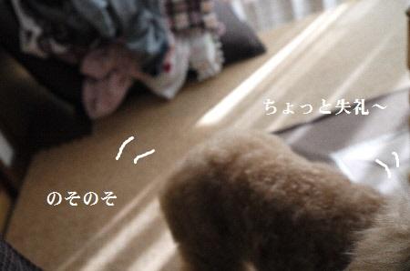 P1320588(1).jpg