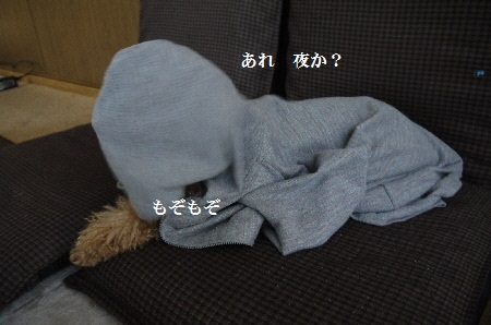 P1320699(1).jpg