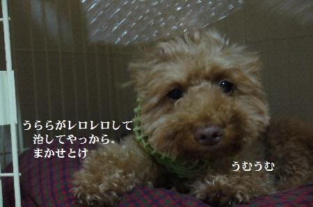 P1320833(1).jpg