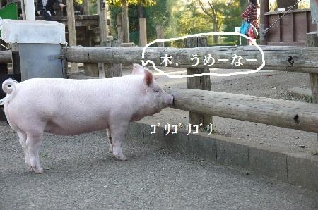 P1320894(1).jpg