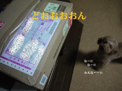 P1330962(1).jpg