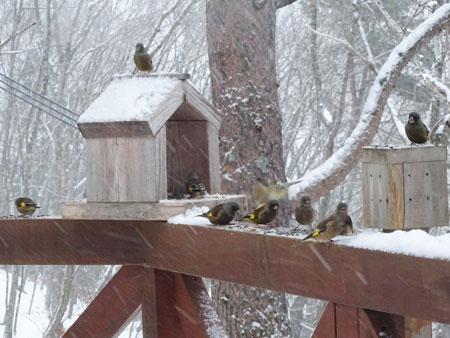小鳥のレストラン1