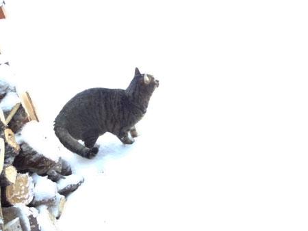 12月なのに大雪4