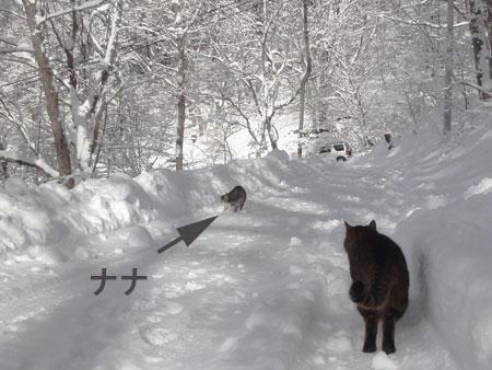 雪道のお散歩!2