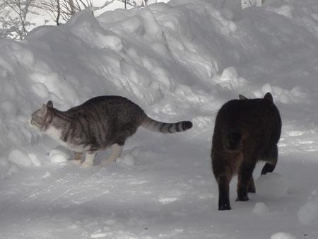 雪道のお散歩!3