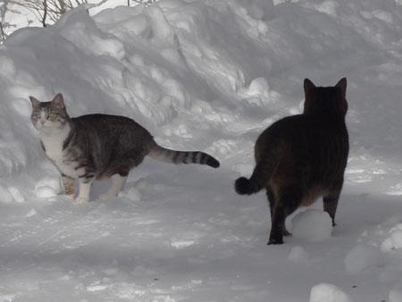 雪道のお散歩!4