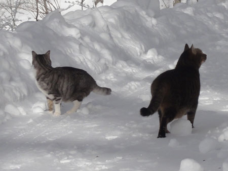 雪道のお散歩!5