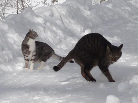 雪道のお散歩!6