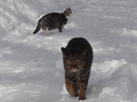 雪道のお散歩!7