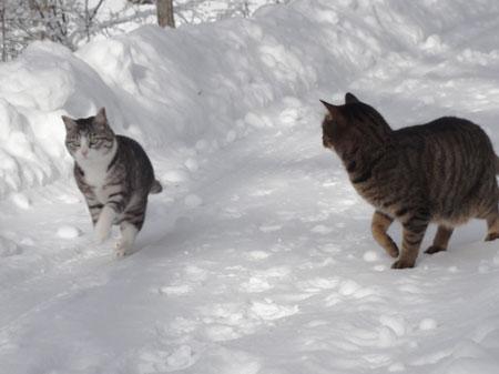 雪道のお散歩!8