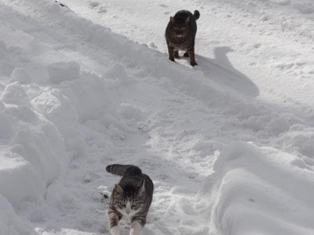 雪道のお散歩!9