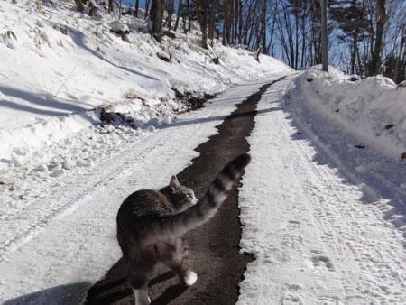雪道が融けて・・・2