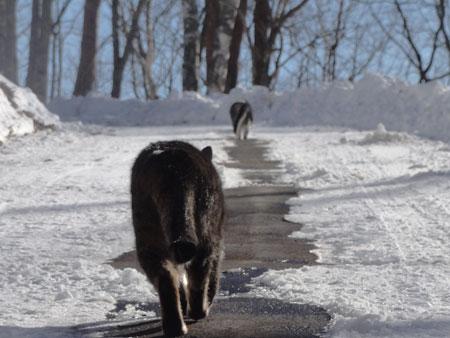 雪道が融けて・・・4