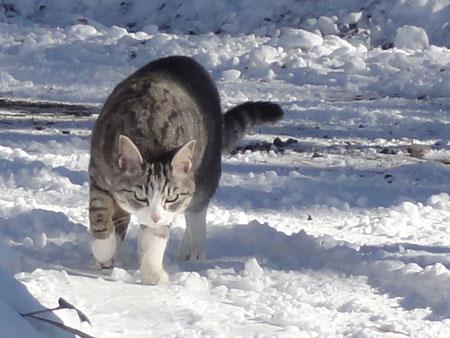 雪道が融けて・・・6