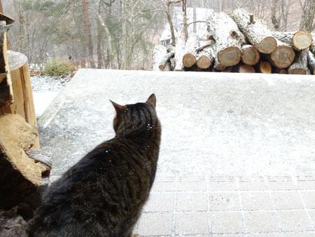 粉雪が舞ってます2