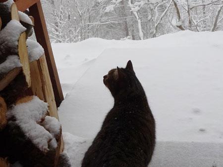 雪、雪、雪・・・4