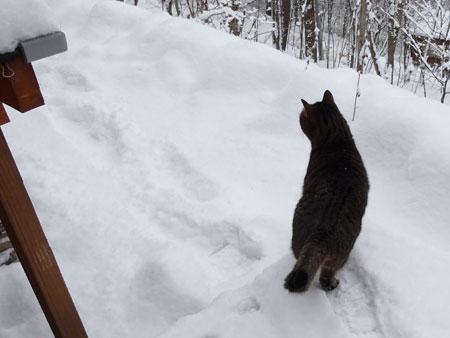 雪、深いぞ4