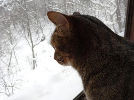 雪、深いぞ5