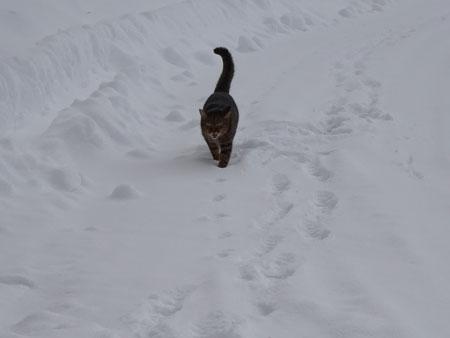 雪こぎマロン1