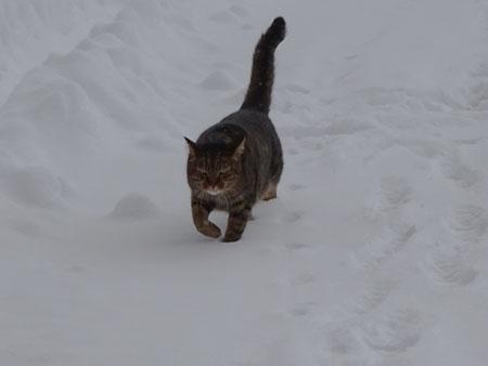 雪こぎマロン2