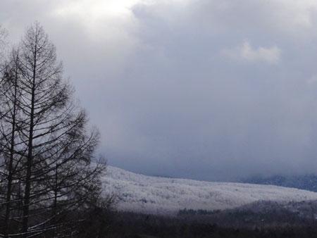 雪の中のお散歩1