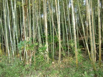 竹林整備前