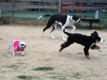 犬 犬 ブタ