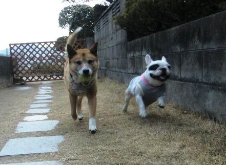 犬と、…あ?隣のなんだ?