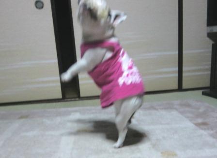 私のダンスを見なさい