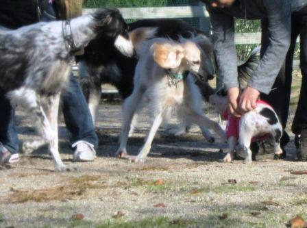 犬vsブタみたいなやつ1