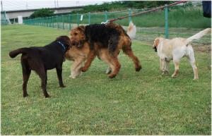 10.6.4大型犬