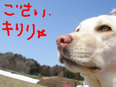 お誕生日様2011-3