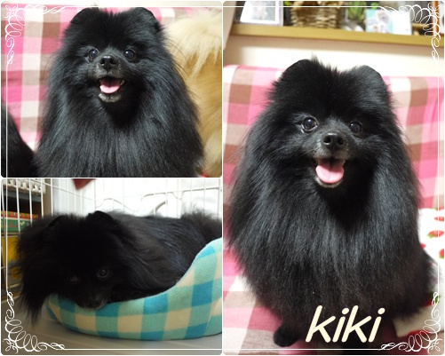 kiki_20110302203742.jpg