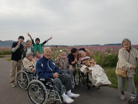 2012コスモス公園2nd (4)