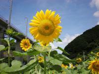 himawari01.jpg