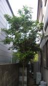 裏の木がお隣まで伸びちゃってます