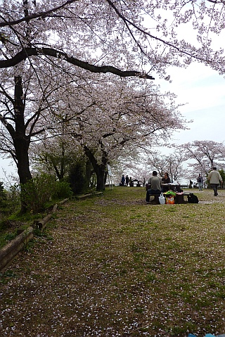 弘法山公園 桜 2012