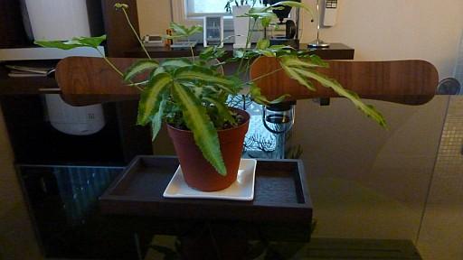 ダイニングテーブル 観葉植物