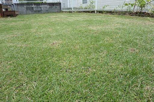 芝刈り 電動