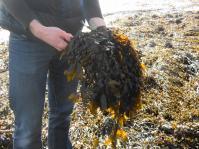 seaweedneil6