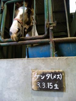 ウマ_convert_20110822092545
