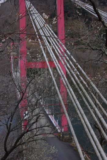 月ヶ瀬八幡橋0