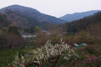 山之辺の道 梅 桧原神社