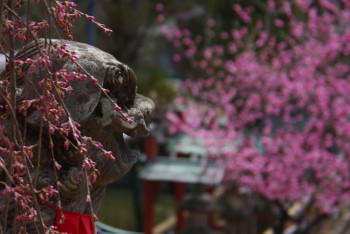 氷室神社狛犬